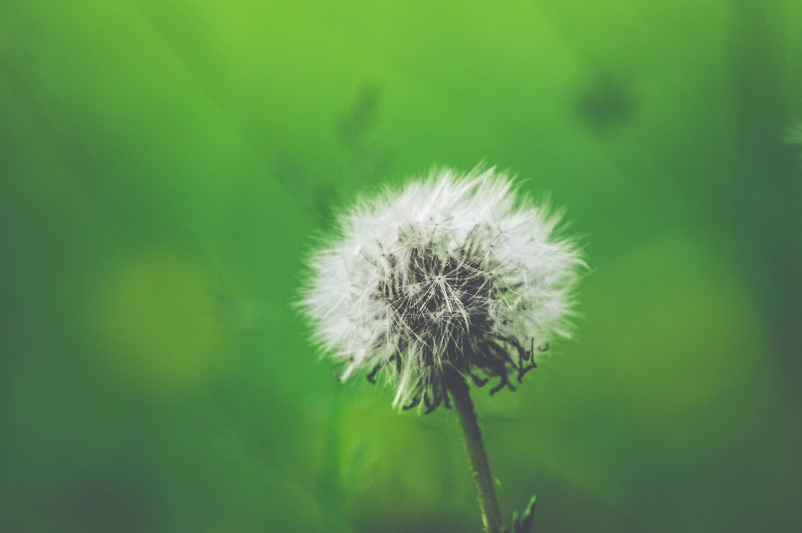 What Exactly Is Allergic Rhinitis – and How Do You Know if You Have It?